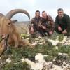 Jagen auf Arrui ( Mähnenziege ) in Spanien.