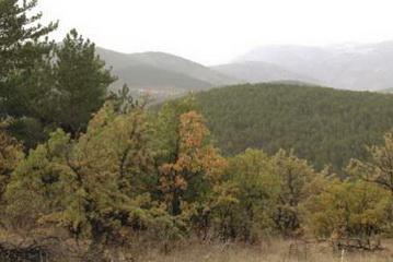 Blick ins Jagdgebiet in der Türkei