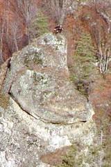 Gams Geis mit Kitz auf 400 Entfernung, Capatanii Gebirge bei Olanesti<small>&copy H. R.</small>