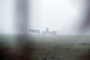 Pferdewagen im Morgennebel<small>&copy H.R.</small>