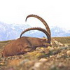 Das Jagdland Kasachstan -  Dschungarischer Alatau