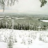 Waldvogeljagd in Lappland