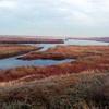 Abenteuer Donaudelta - ein Natur- und Flugwildparadies der Extraklasse