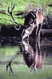 Der Internationale Jagdrat CIC zur Erhaltung des Wildes