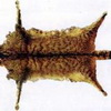 Weltrekord Wildkatze