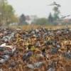 Eine Tolle Taubenjagd in Ungarn 2019