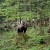 Braunbärjagd - das Jagderlebnis Ihres Lebens