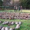 Fasane Jagd in Tschechien