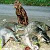 Neue Wildbrethygieneverordnung ab 2005