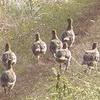 Vogelgrippe und die Jägerschaft