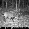 Infrarot Wildkameras auch Fotofallen genannt werden immer beliebter