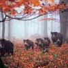 Kroatien - Ein Land mit langer Jagdtradition