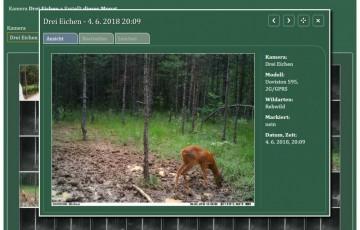 RevierBuch - Wildkamera Foto