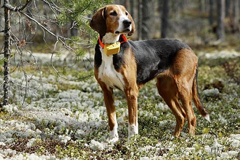 Gps Entfernungsmesser Jagd : Superjagd jagd shop gps ortungsgerät tracker g