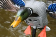 MOJO Elite Series™ KING MALLARD motorbetriebe Lockenten